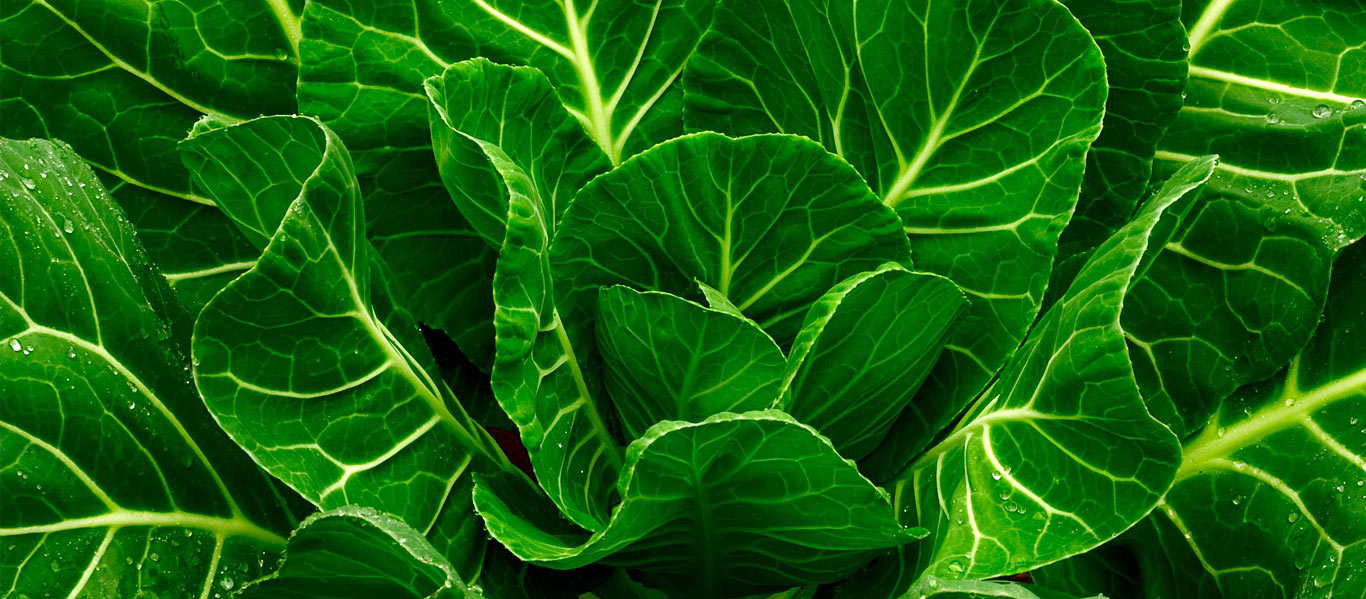 collard_greens_for_wrinkles
